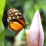 2014-12-29_schmetterling